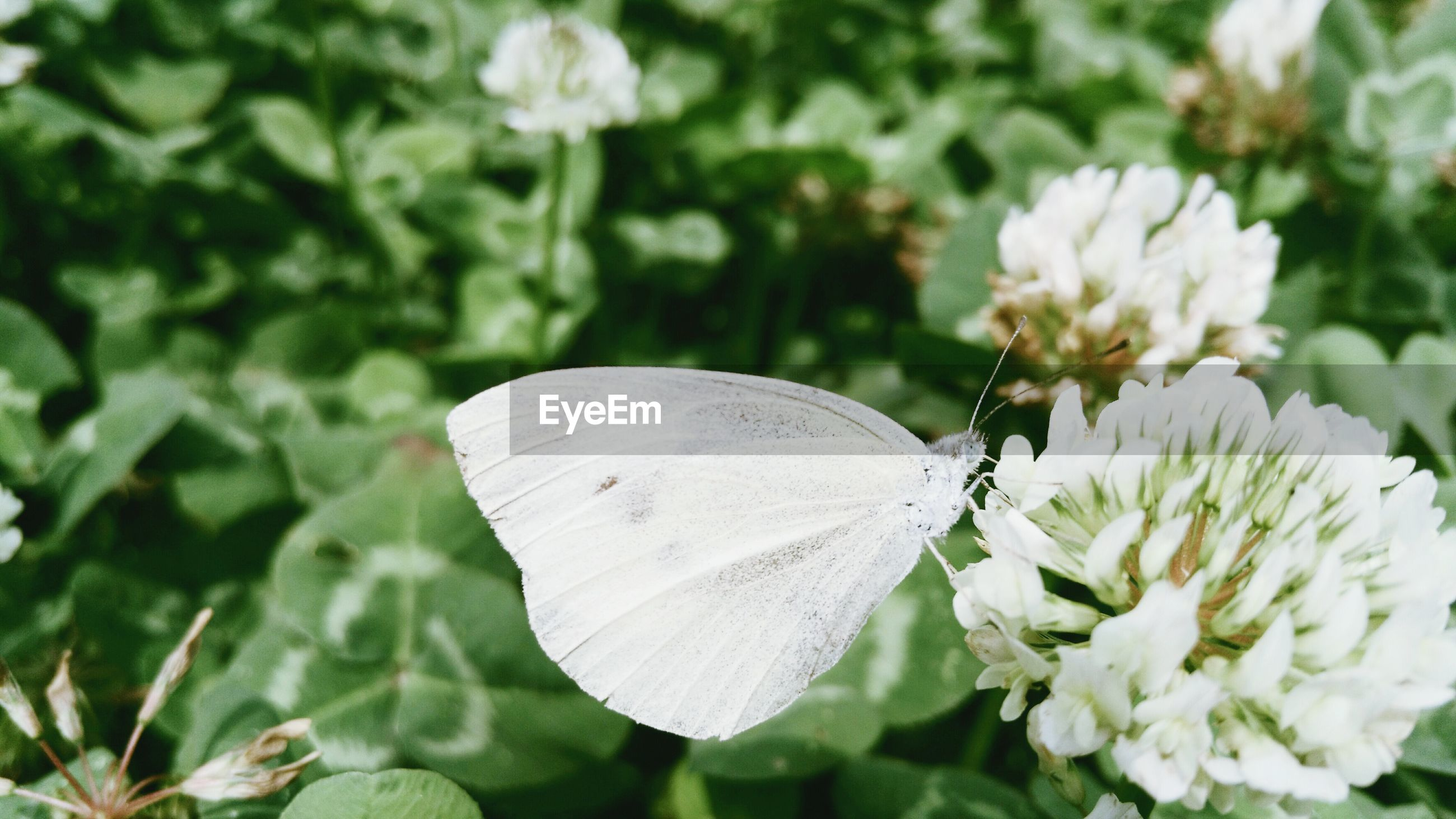 flower, petal, fragility, white color, freshness, flower head, insect, growth, beauty in nature, close-up, focus on foreground, one animal, nature, blooming, wildlife, plant, animals in the wild, pollen, animal themes, in bloom