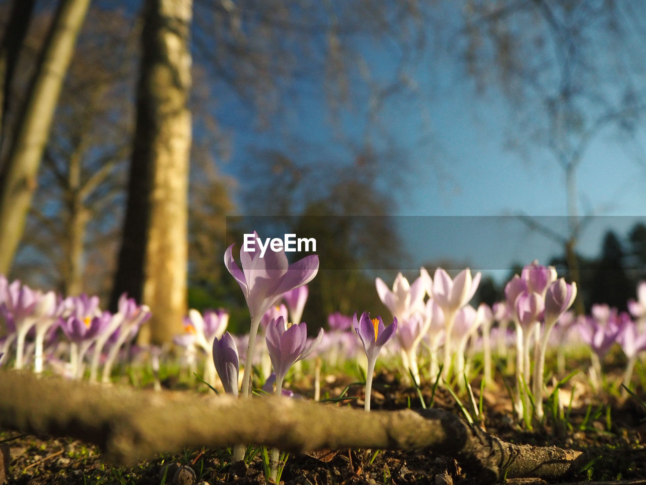 flowering plant, flower, plant, beauty in nature, freshness, vulnerability, fragility, growth, pink color, petal, close-up, land, nature, no people, day, field, selective focus, focus on foreground, flower head, inflorescence, outdoors, springtime, iris, crocus, purple