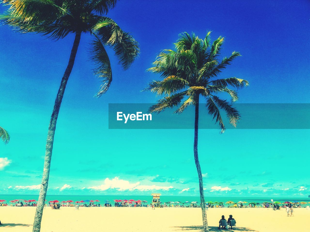 tropical climate, palm tree, tree, sky, plant, beach, land, coconut palm tree, blue, sea, nature, water, beauty in nature, growth, trunk, tree trunk, scenics - nature, sand, tranquility, day, tropical tree, outdoors, tall - high, no people, horizon over water, turquoise colored, palm leaf