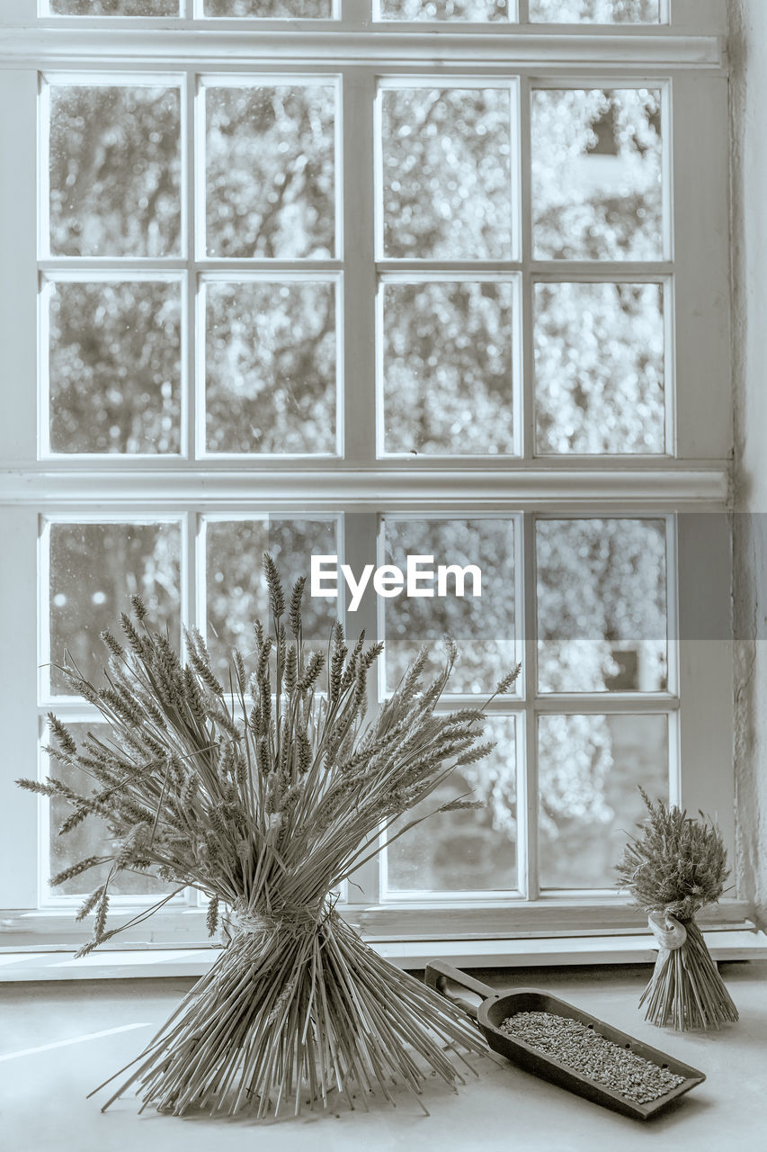window, indoors, plant, no people, flower, nature, flowering plant, vase, close-up, table, glass - material, focus on foreground, potted plant, day, window sill, tree, transparent, decoration, pattern, flower arrangement, houseplant