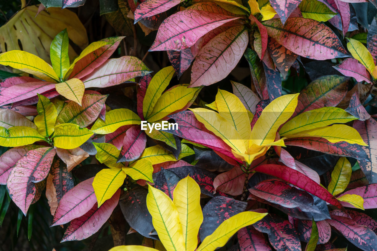 leaf, plant part, close-up, beauty in nature, plant, leaves, growth, no people, nature, full frame, backgrounds, day, autumn, yellow, high angle view, vulnerability, natural pattern, fragility, outdoors, leaf vein, change, purple