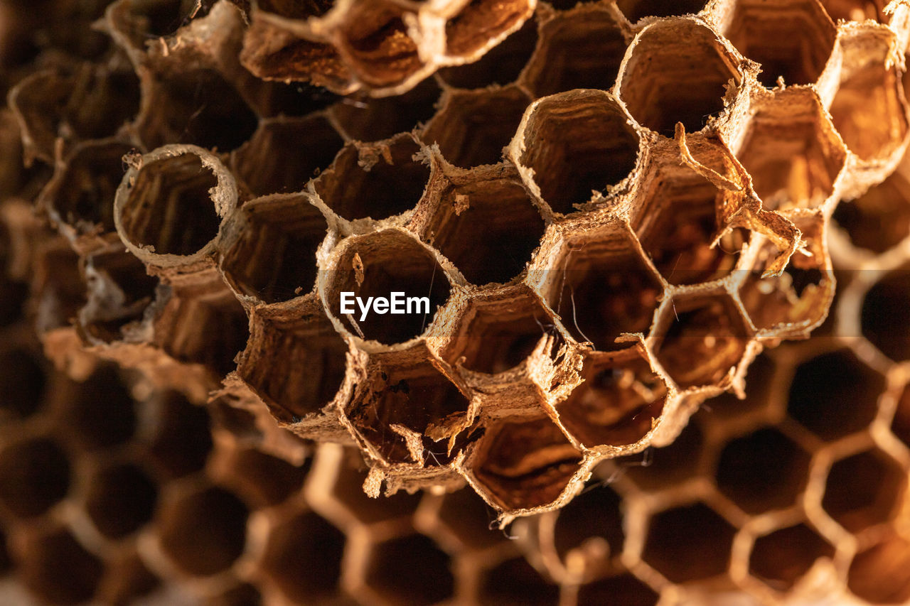 honeycomb, close-up, apiculture, beehive, pattern, hexagon, no people, bee, nature, focus on foreground, day, insect, invertebrate, selective focus, animal themes, natural pattern, animal, outdoors, animals in the wild, group of animals