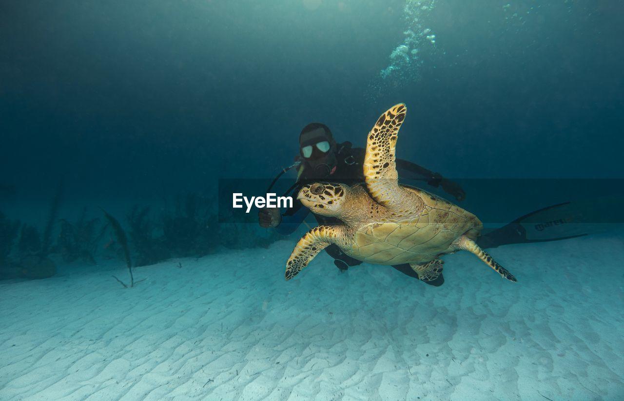 sea, animal themes, water, animal, underwater, animals in the wild, animal wildlife, swimming, turtle, undersea, vertebrate, sea life, nature, one animal, reptile, marine, sea turtle, no people, fish, outdoors
