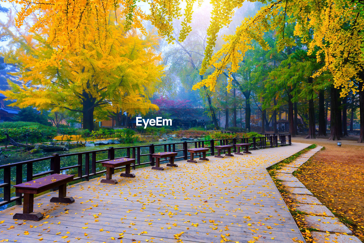 autumn, plant, tree, change, park, footpath, park - man made space, plant part, leaf, nature, the way forward, beauty in nature, day, yellow, direction, seat, bench, no people, growth, tranquility, park bench, outdoors, diminishing perspective, fall, autumn collection, treelined
