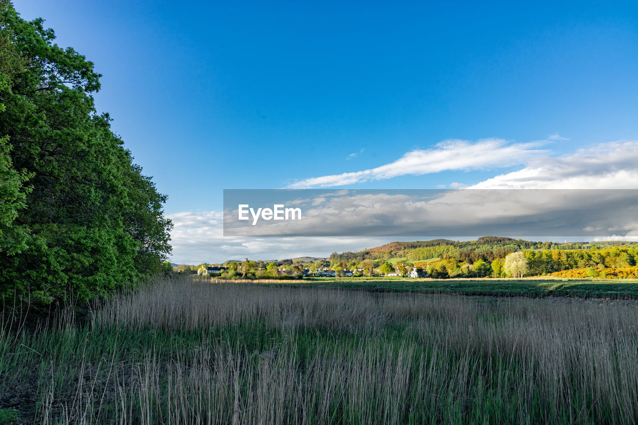 plant, sky, beauty in nature, scenics - nature, tranquility, growth, tranquil scene, cloud - sky, field, nature, land, blue, tree, green color, environment, landscape, no people, day, water, idyllic, outdoors