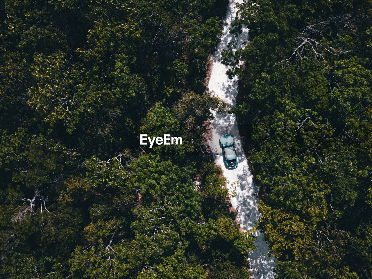High angle view of car on road amidst trees in forest
