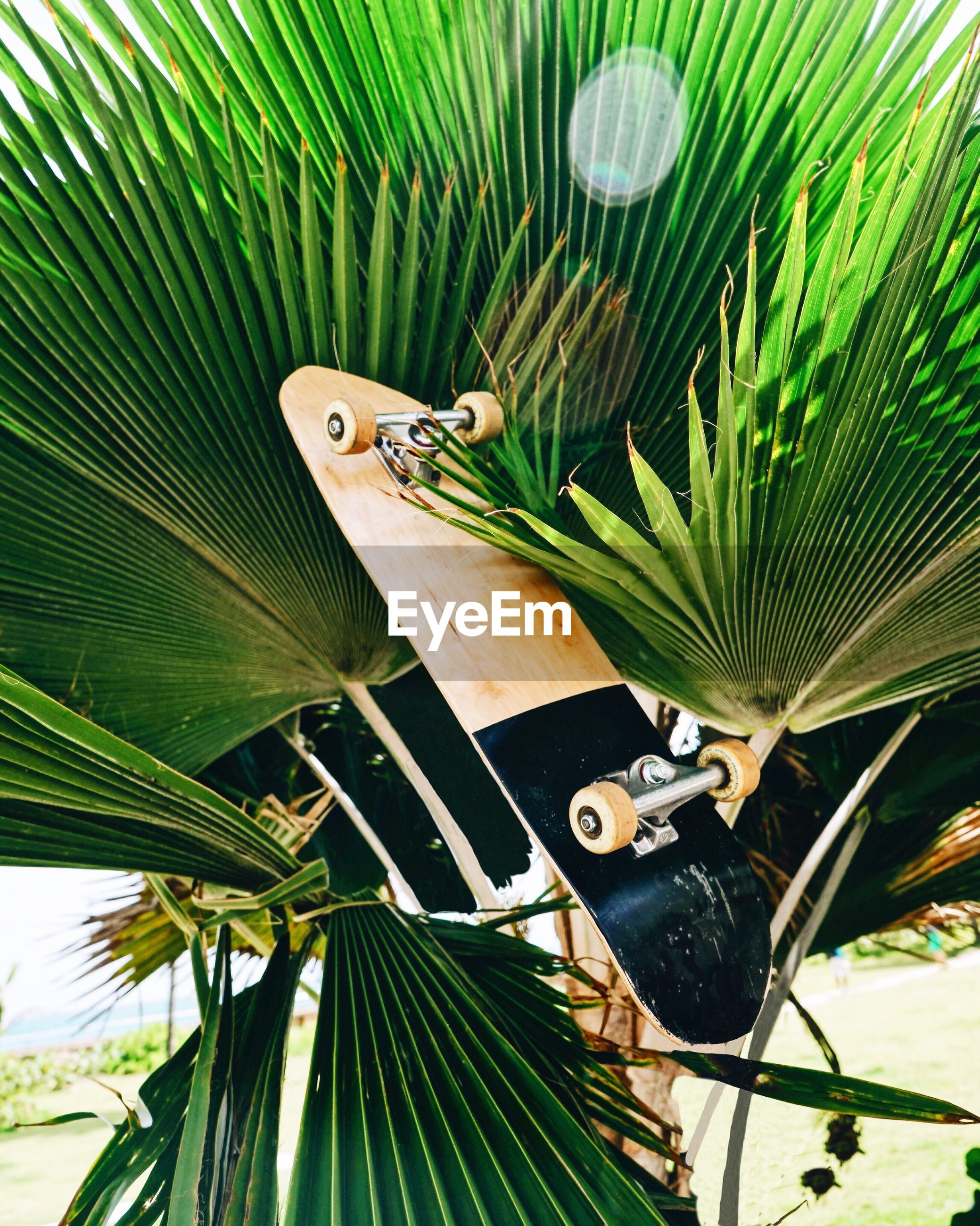 Close-up of skateboard on palm tree
