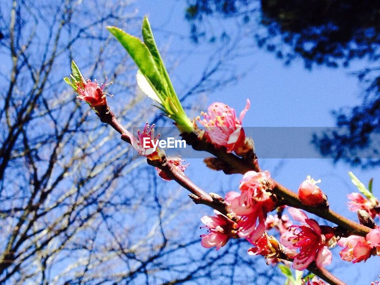 flower, growth, beauty in nature, nature, low angle view, fragility, freshness, tree, branch, no people, day, outdoors, plant, petal, springtime, close-up, flower head, blooming, sky
