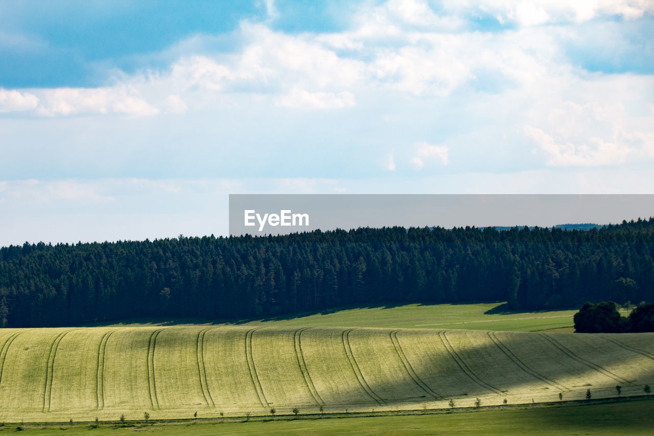 tree, tranquility, tranquil scene, beauty in nature, nature, sky, landscape, scenics, field, no people, day, cloud - sky, growth, outdoors, rural scene