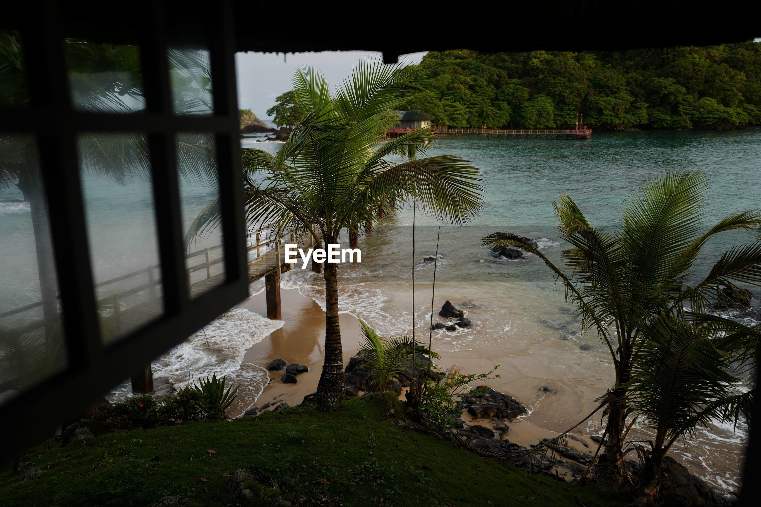 Palm trees at sea shore seen through window