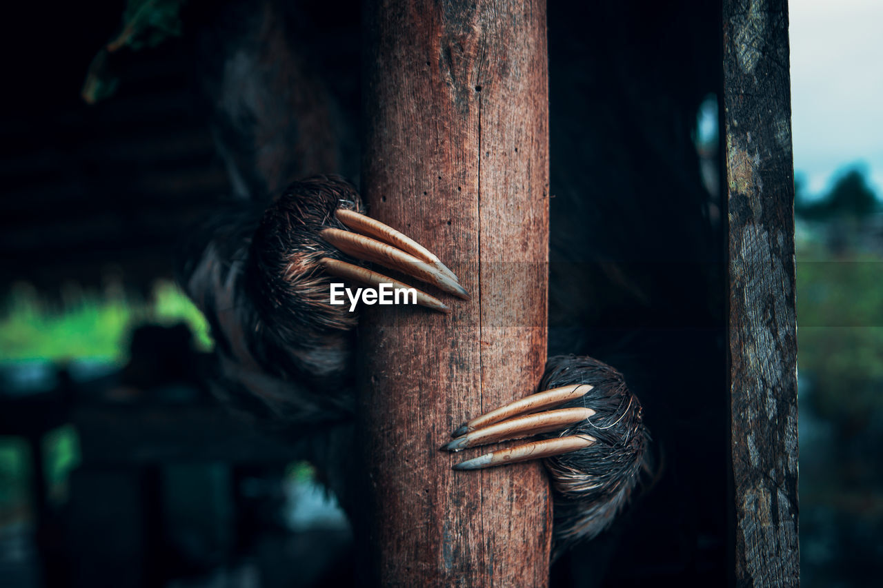 wood - material, focus on foreground, close-up, day, no people, outdoors, selective focus, nature, tree, tied up, metal, boundary, barrier, animal, vertebrate, animal themes, one animal, fence, bird, trunk, wooden post