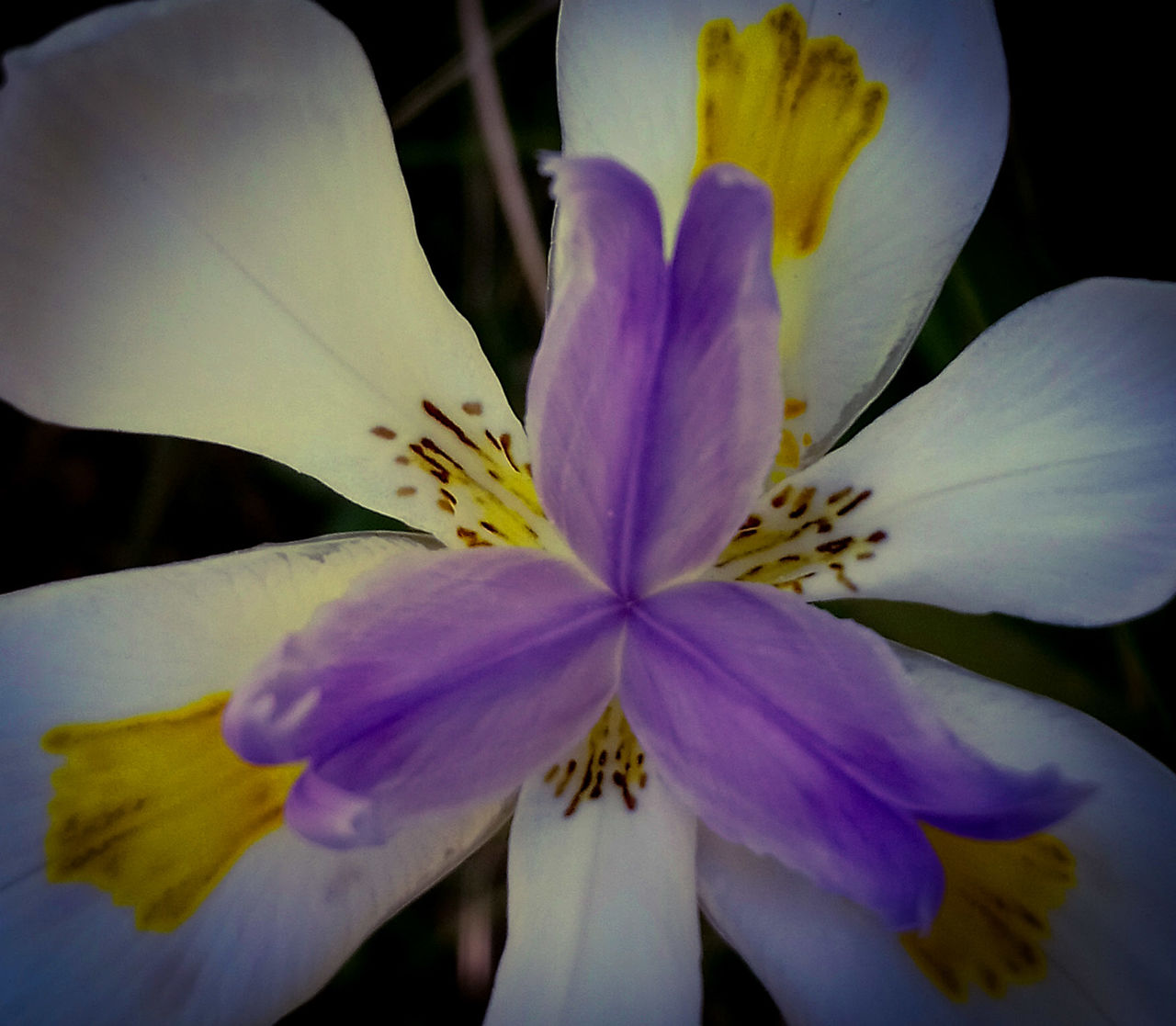 flower, petal, fragility, flower head, beauty in nature, freshness, nature, growth, close-up, stamen, blossom, pollen, springtime, no people, blooming, outdoors, day, plant