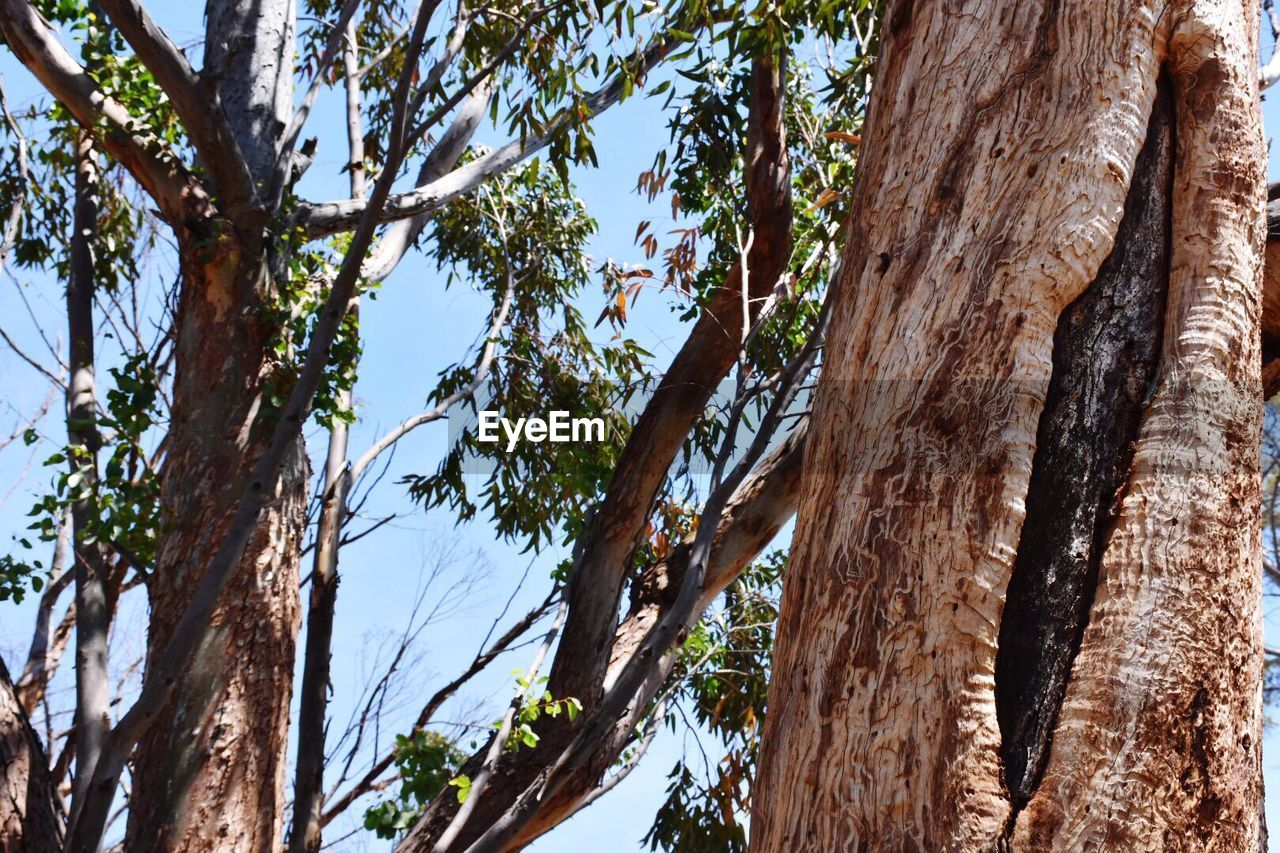tree, tree trunk, low angle view, branch, day, nature, no people, growth, outdoors, bark, wood - material, beauty in nature, sky, dead tree