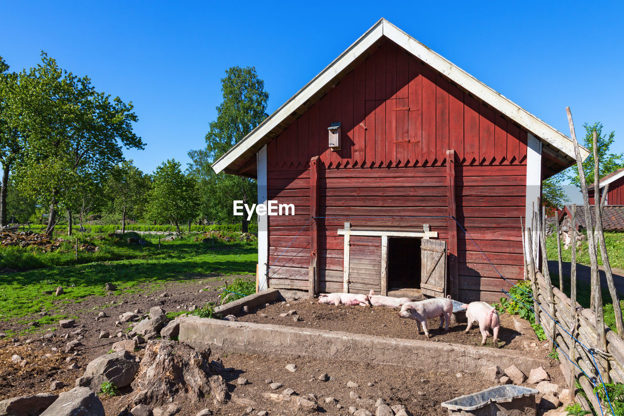 architecture, built structure, building exterior, tree, animal, animal themes, mammal, house, day, plant, nature, domestic animals, building, no people, domestic, farm, livestock, pets, agricultural building, vertebrate, outdoors
