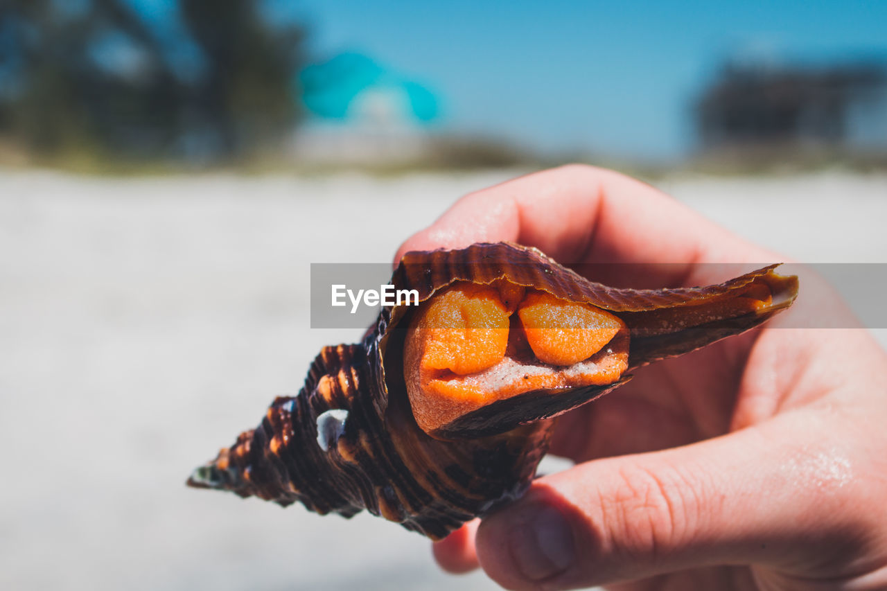 Cropped image of hand holding sea shell with orange peel