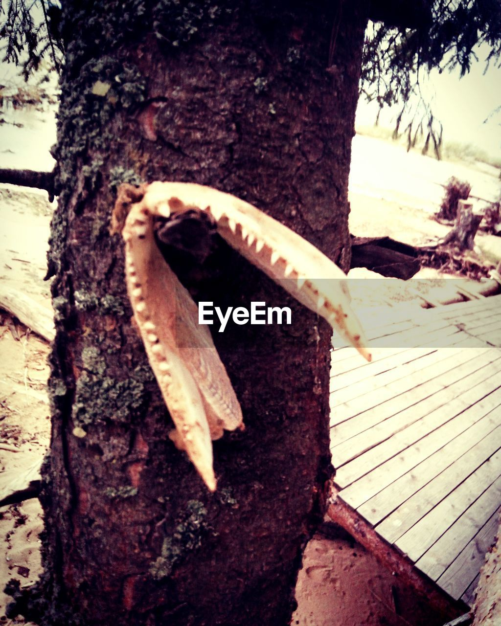 tree trunk, one animal, outdoors, nature, day, close-up, no people, animal themes, animals in the wild, tree, fragility