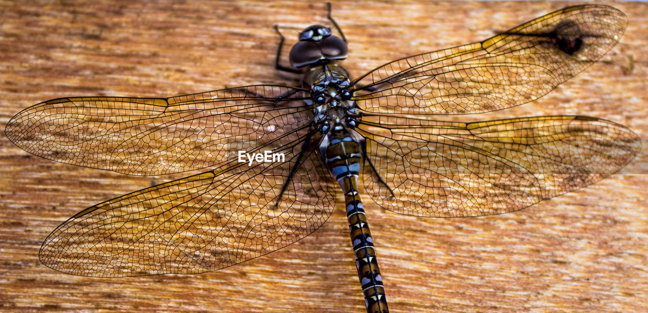 insect, animal themes, animals in the wild, animal wildlife, no people, close-up, one animal, day, outdoors, nature