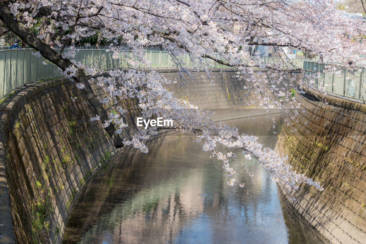 Scenic view of canal amidst cherry blossom trees