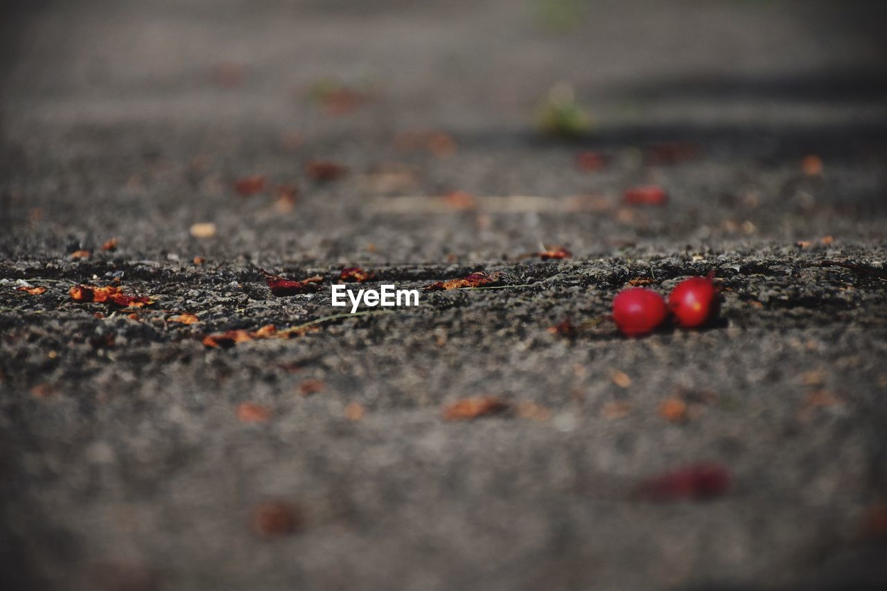 selective focus, red, day, no people, close-up, food and drink, road, food, nature, fruit, outdoors, asphalt, surface level, healthy eating, falling, city, textured, leaf, plant part, beauty in nature