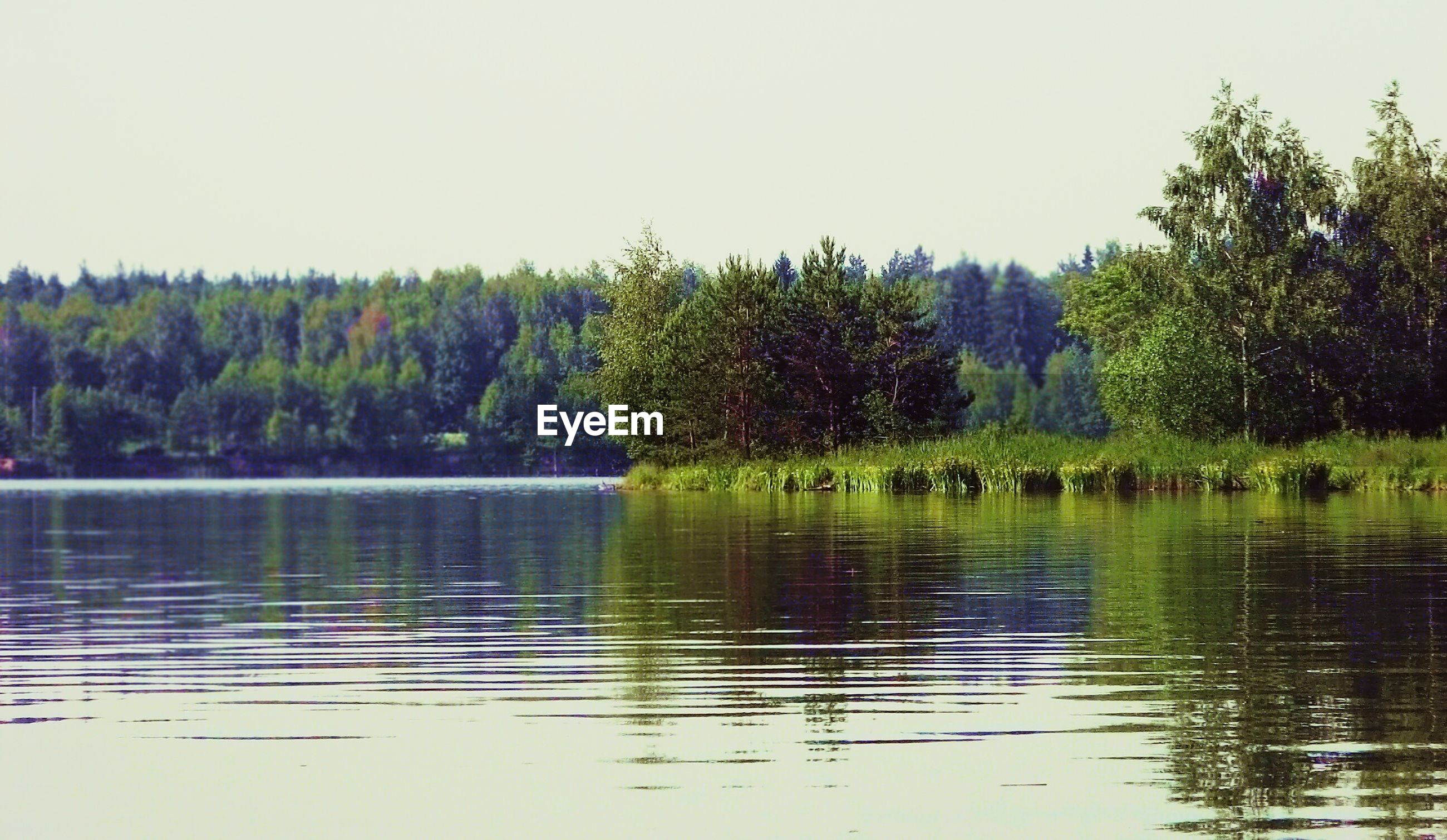 TREES REFLECTING IN LAKE