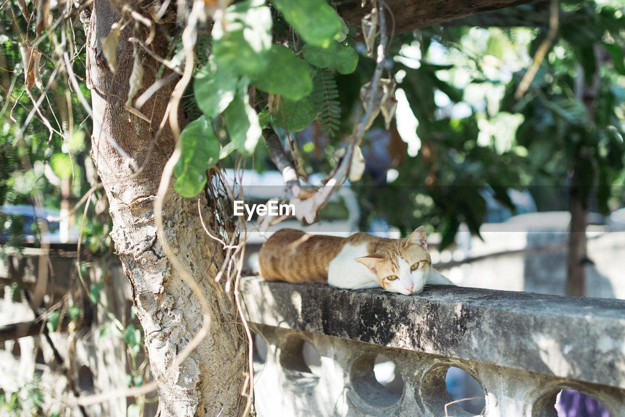 Stray cat lying on retaining wall by tree