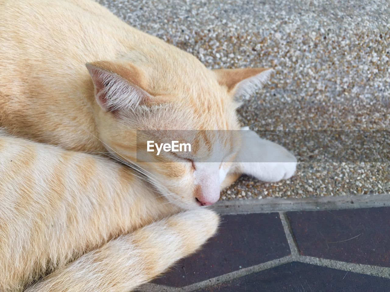 domestic, pets, mammal, one animal, animal themes, animal, domestic animals, relaxation, vertebrate, high angle view, domestic cat, cat, feline, lying down, dog, sleeping, no people, canine, resting, eyes closed, animal head, ginger cat, whisker