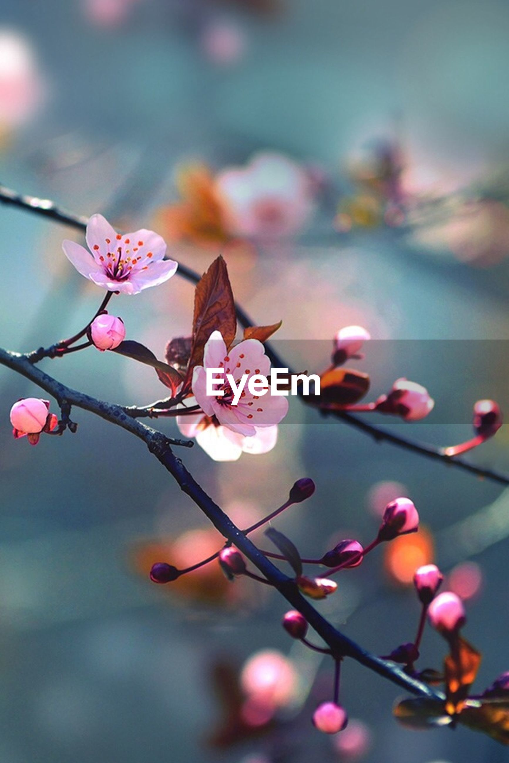 flower, freshness, fragility, focus on foreground, growth, petal, close-up, beauty in nature, twig, branch, nature, flower head, blooming, blossom, bud, selective focus, in bloom, stem, pink color, plant