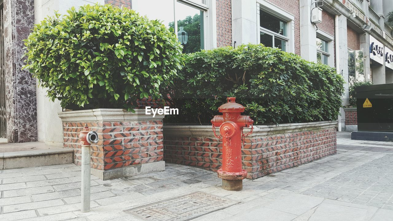 building exterior, architecture, built structure, outdoors, day, red, fire hydrant, window, no people, city, tree, nature