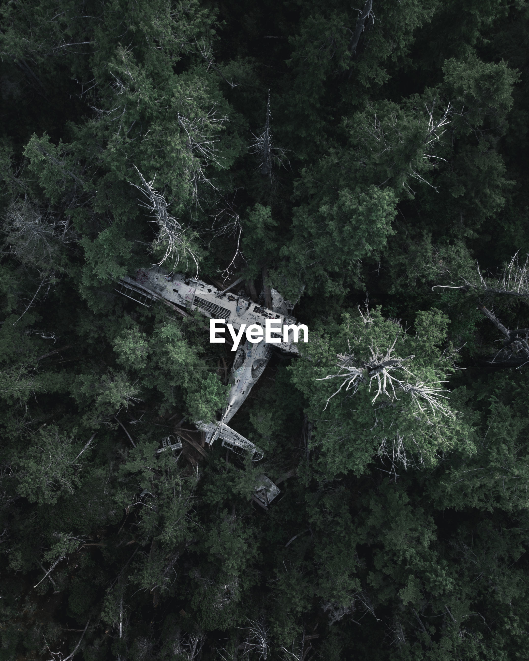 Aerial view of abandoned airplane amidst trees in forest