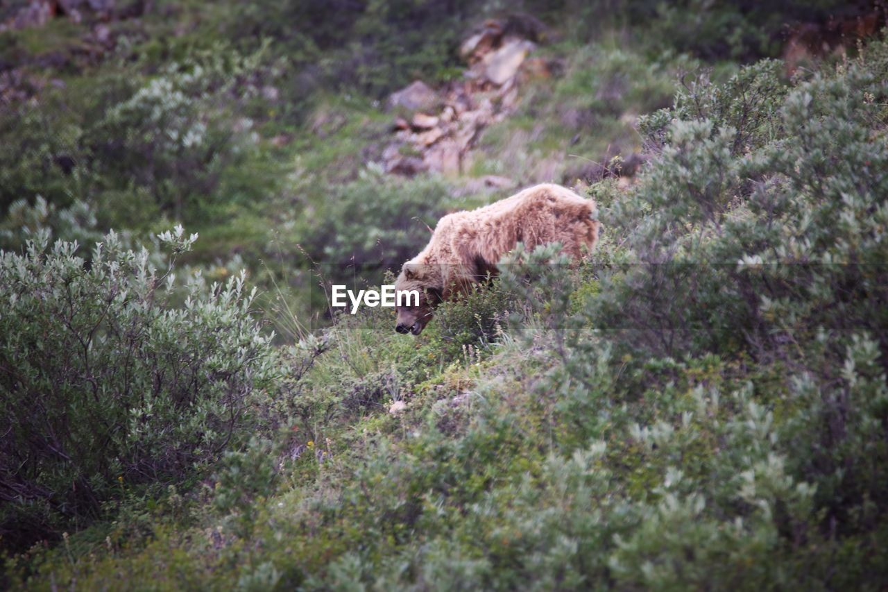 Low Angle View Of Bear On Hillside