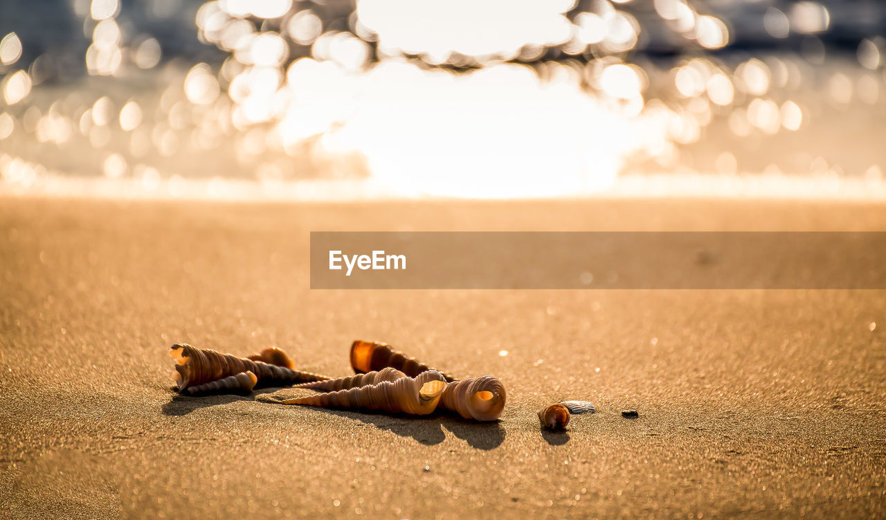 focus on foreground, land, nature, sand, beach, no people, close-up, sunlight, sky, sunset, sea, outdoors, water, selective focus, day, beauty in nature, social issues, still life, container, city, surface level