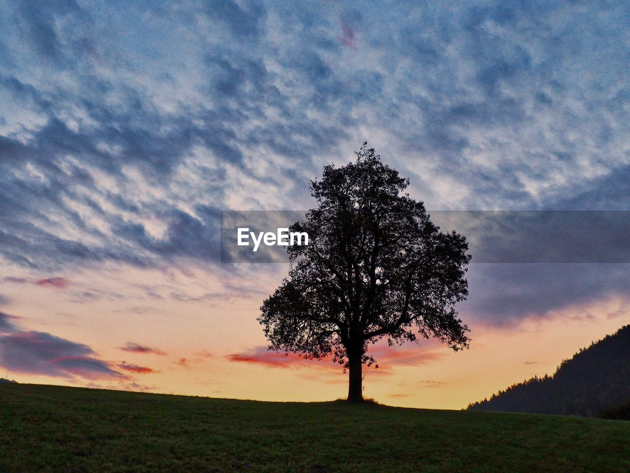 sky, cloud - sky, beauty in nature, tree, tranquil scene, tranquility, field, sunset, environment, scenics - nature, land, plant, landscape, nature, grass, no people, single tree, outdoors, horizon over land, idyllic, isolated