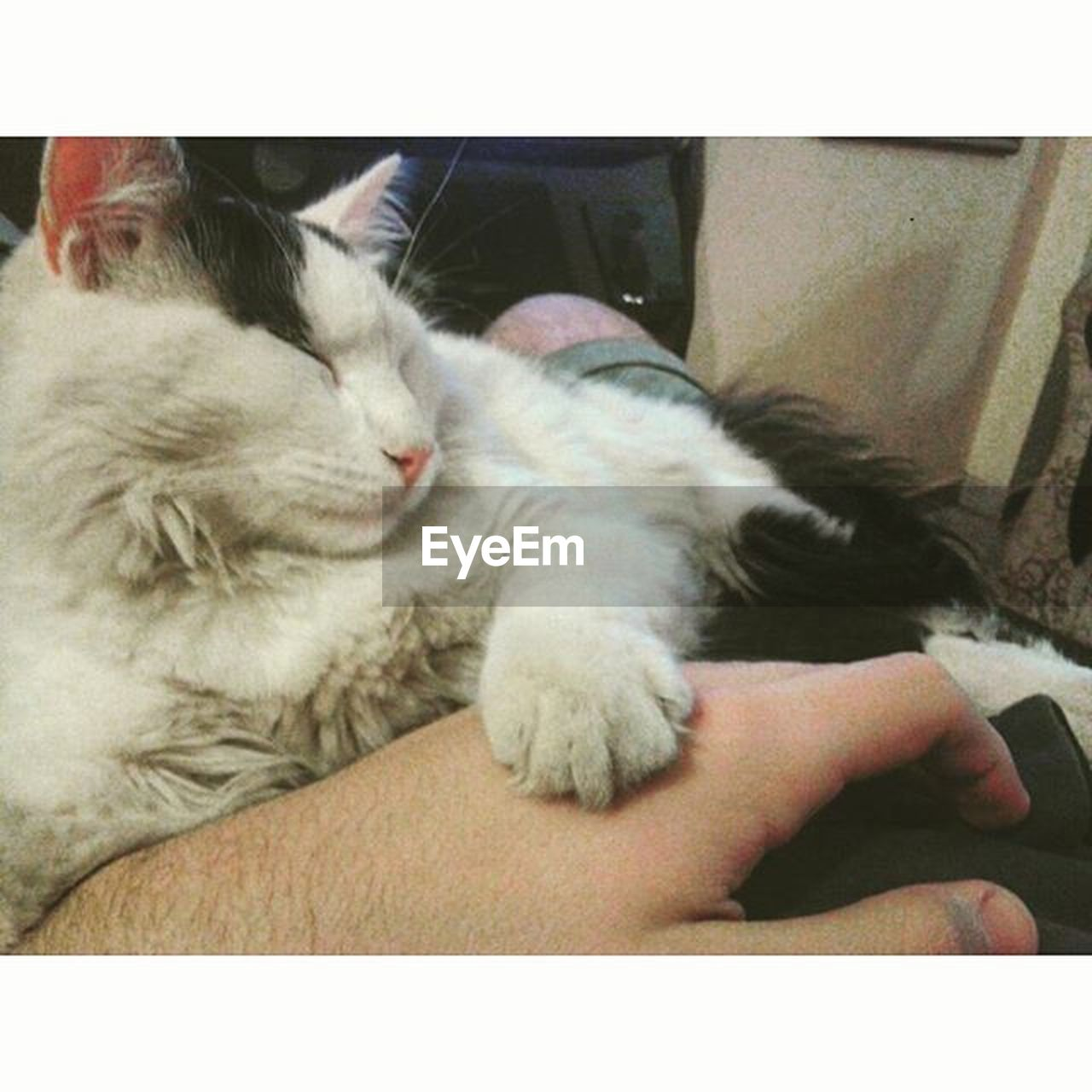 domestic cat, pets, domestic animals, animal themes, one animal, mammal, cat, feline, indoors, sleeping, relaxation, lying down, whisker, one person, real people, cute, human hand, close-up, day, human body part, nature, people