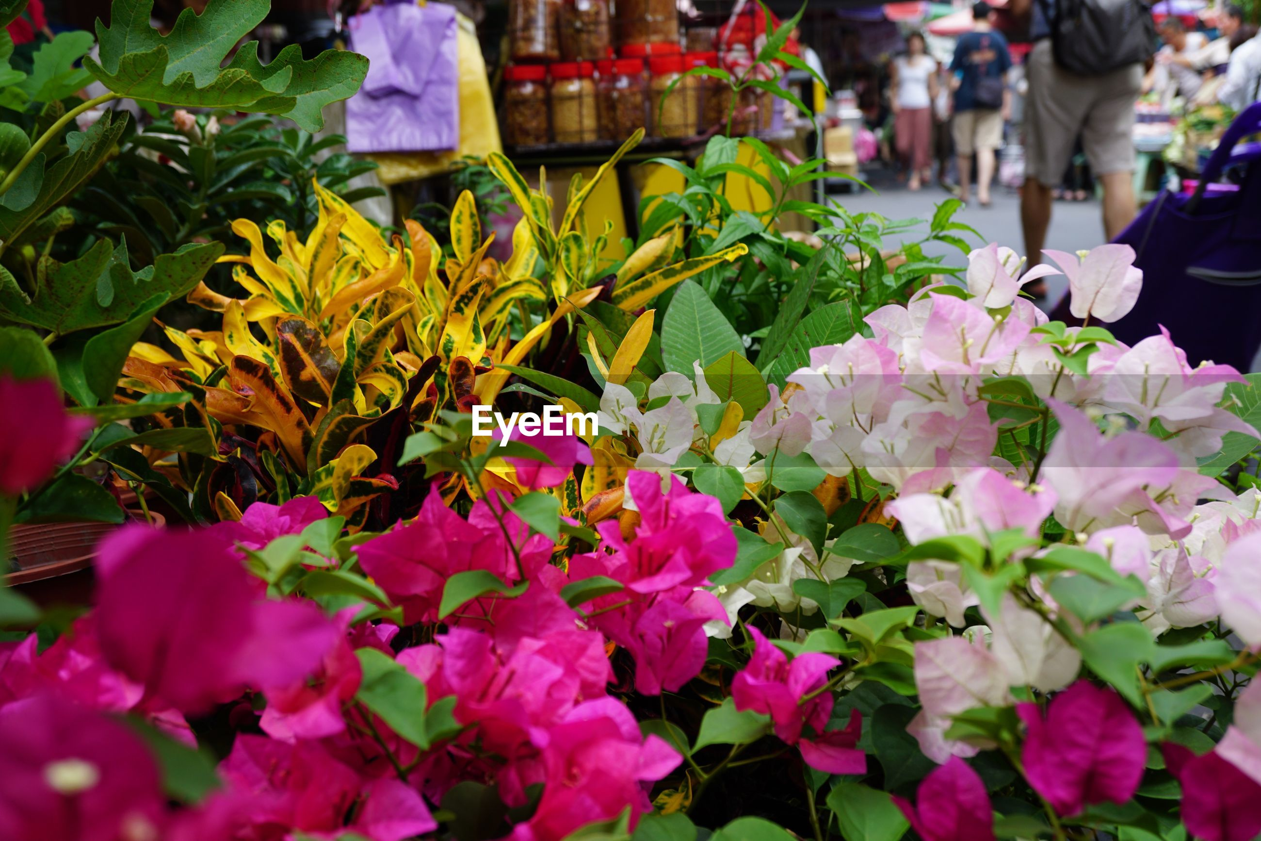 flower, flowering plant, freshness, plant, fragility, vulnerability, beauty in nature, petal, market, close-up, incidental people, pink color, day, choice, flower head, inflorescence, nature, plant part, leaf, growth, outdoors, springtime, bunch of flowers, bouquet, flower arrangement