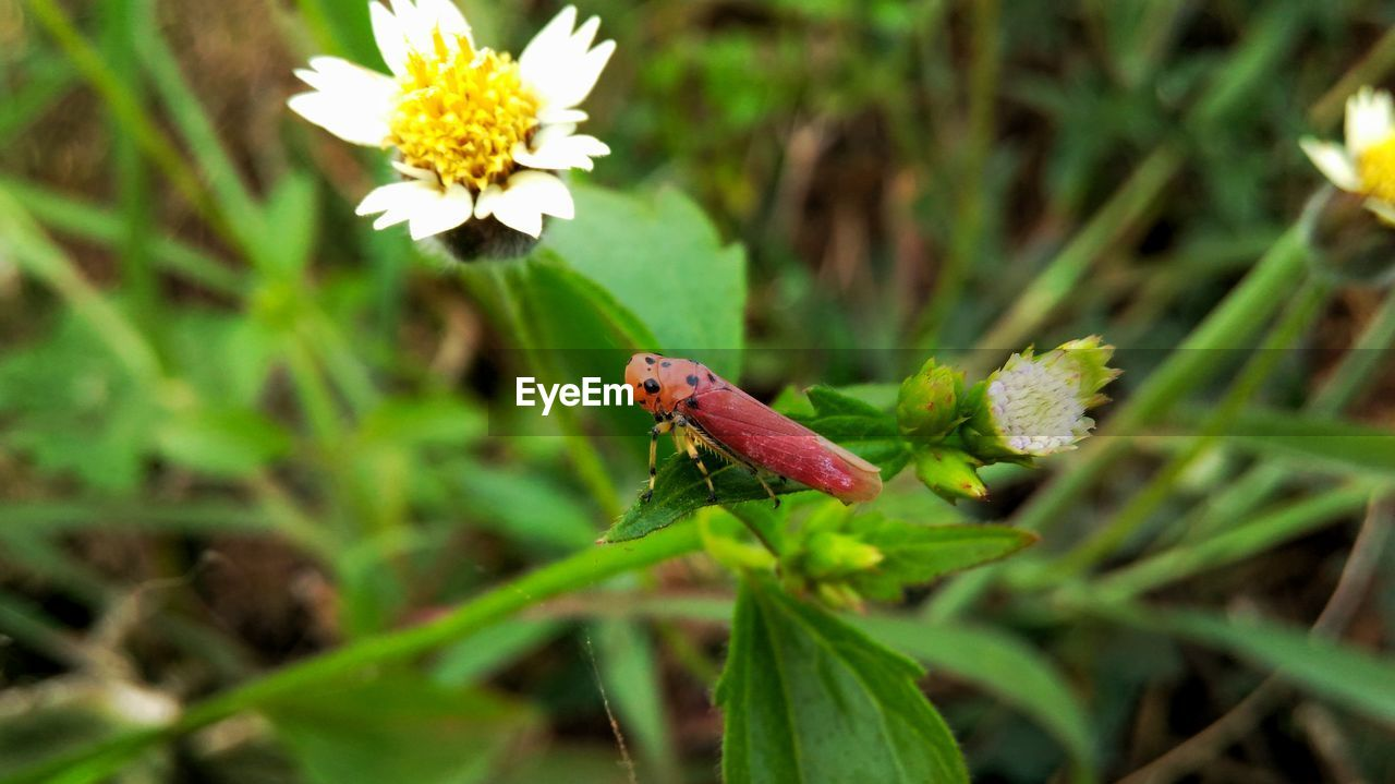plant, flower, flowering plant, one animal, growth, beauty in nature, animal, animal wildlife, animals in the wild, animal themes, green color, fragility, vulnerability, nature, freshness, close-up, insect, day, invertebrate, plant part, no people, flower head