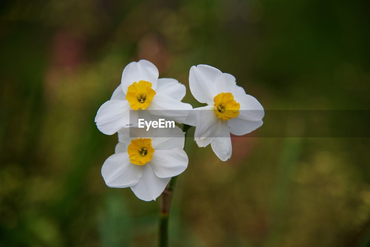 flowering plant, flower, plant, fragility, petal, vulnerability, freshness, beauty in nature, flower head, growth, inflorescence, close-up, focus on foreground, yellow, white color, nature, day, no people, outdoors, pollen