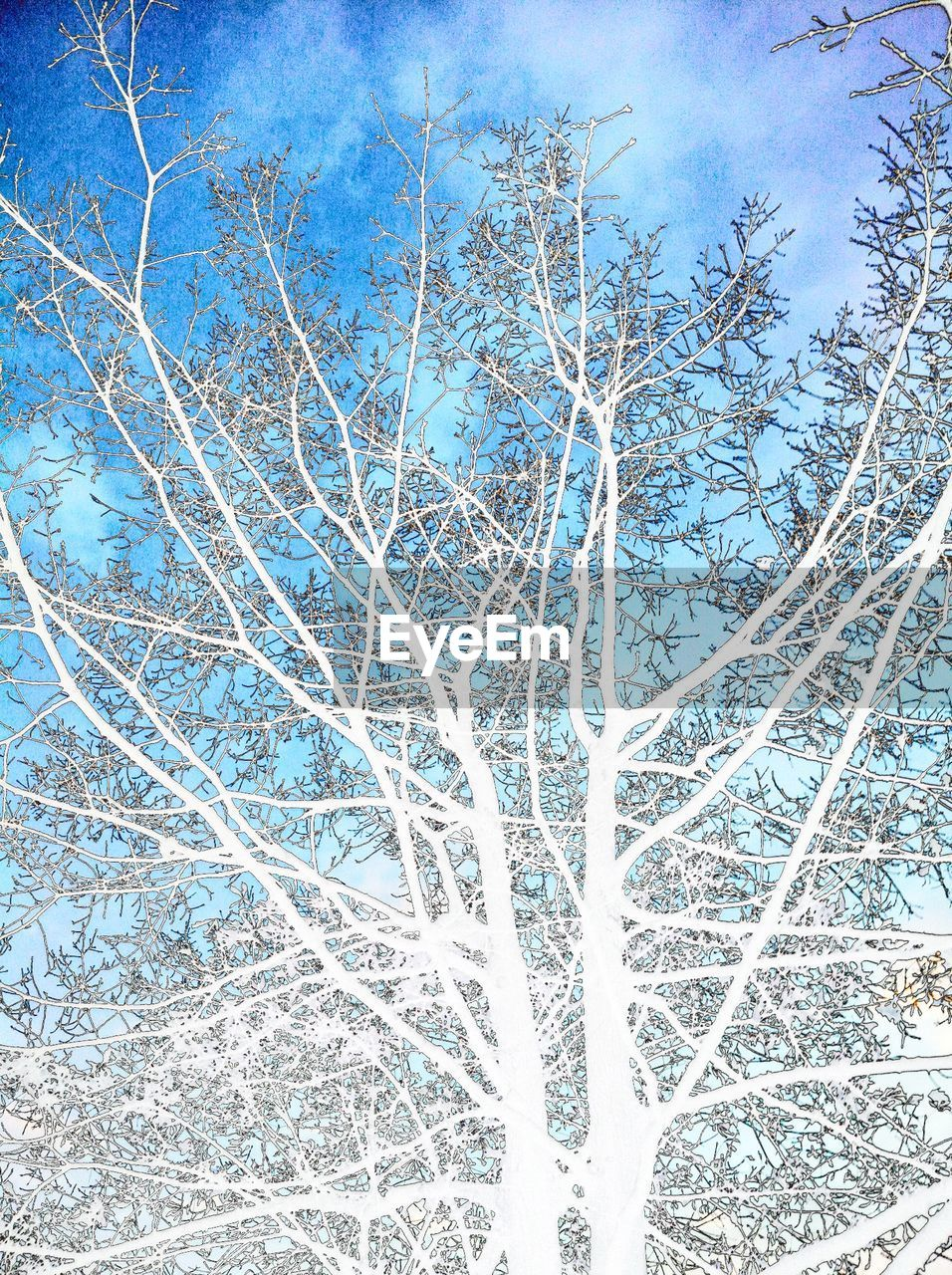 tree, day, no people, nature, low angle view, outdoors, bare tree, winter, branch, sky, snow, beauty in nature, close-up