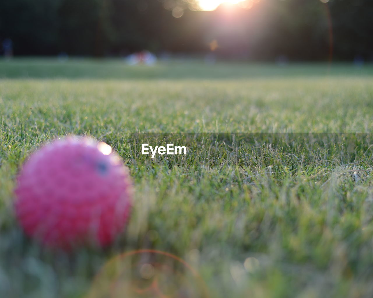 grass, selective focus, field, playing field, green color, growth, no people, nature, outdoors, beauty in nature, day, sport, close-up, soccer field, green - golf course, freshness