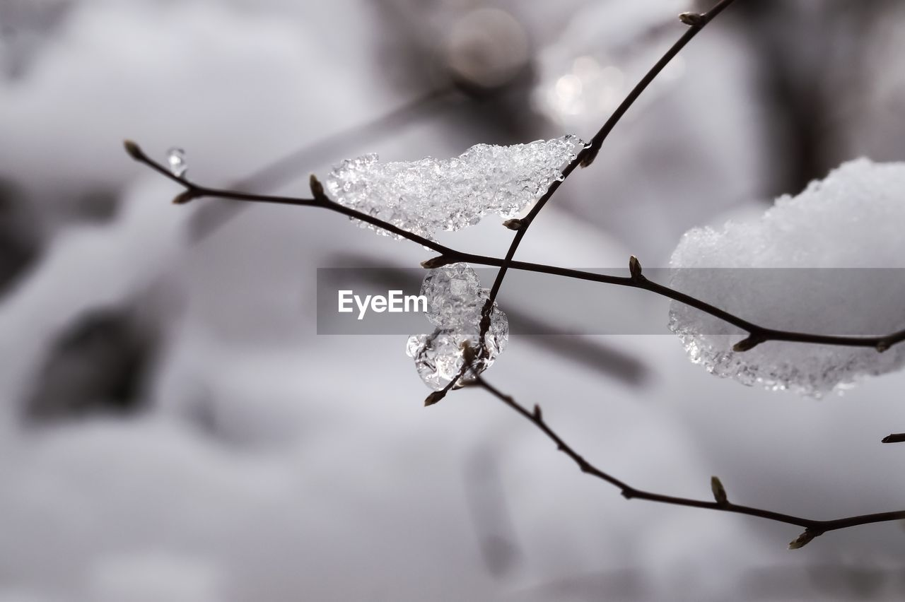 cold temperature, winter, snow, frozen, ice, weather, nature, frost, beauty in nature, cold, focus on foreground, outdoors, fragility, twig, icicle, white color, day, ice crystal, drop, close-up, no people, water, snowflake, freshness, sky