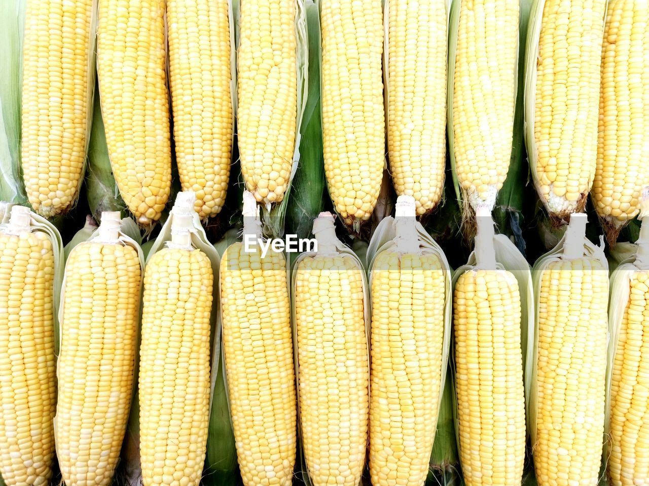 Directly Above Shot Of Sweet Corns