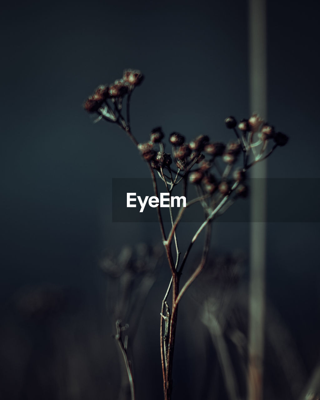 plant, close-up, focus on foreground, growth, no people, flower, dry, vulnerability, beauty in nature, plant stem, nature, selective focus, fragility, flowering plant, day, tranquility, outdoors, dried plant, bud, dead plant, wilted plant, dried