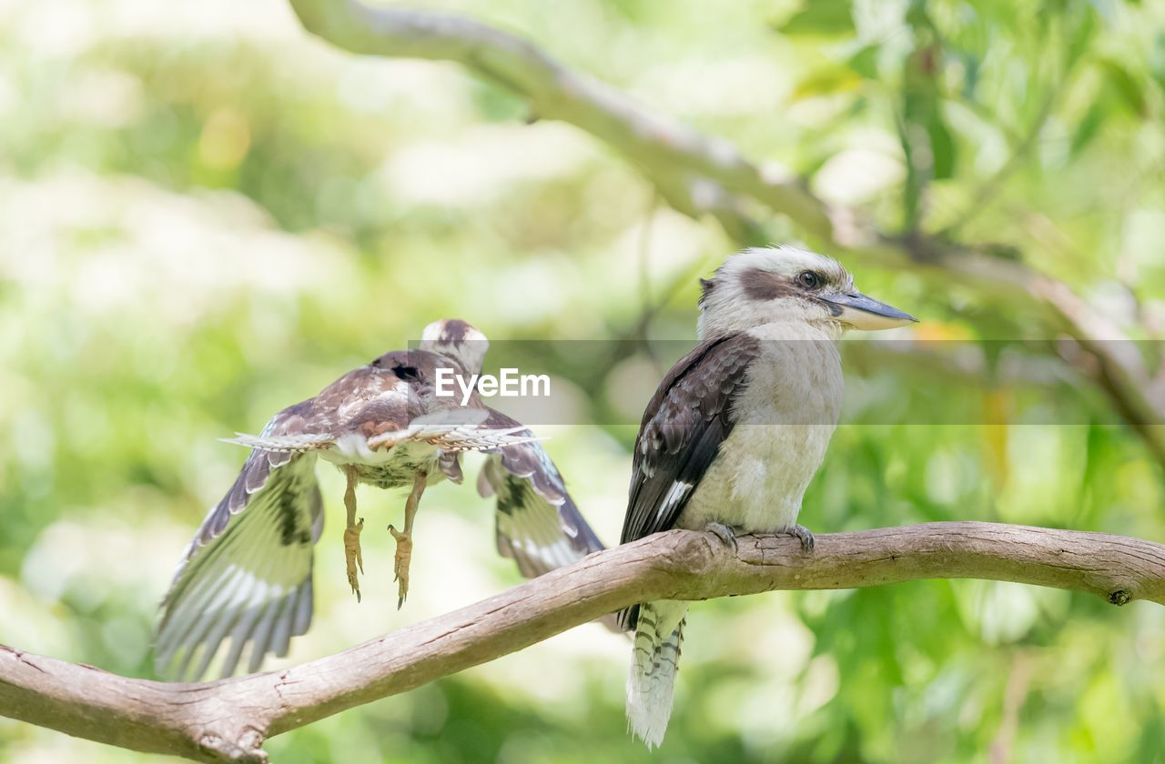 animal wildlife, animal themes, animal, vertebrate, animals in the wild, bird, perching, focus on foreground, plant, tree, group of animals, two animals, branch, nature, no people, day, outdoors, close-up, beak