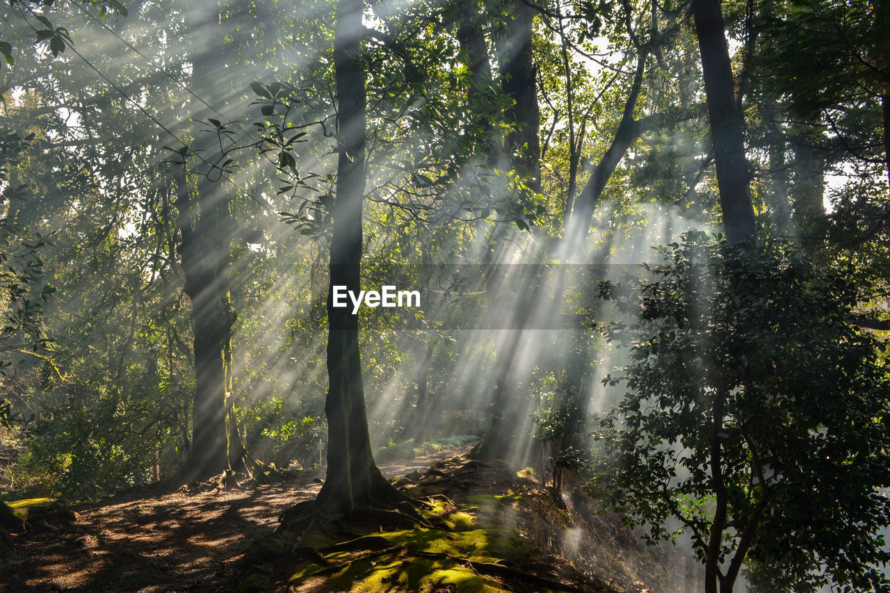 Sunbeam Emitting Through Tree In Forest