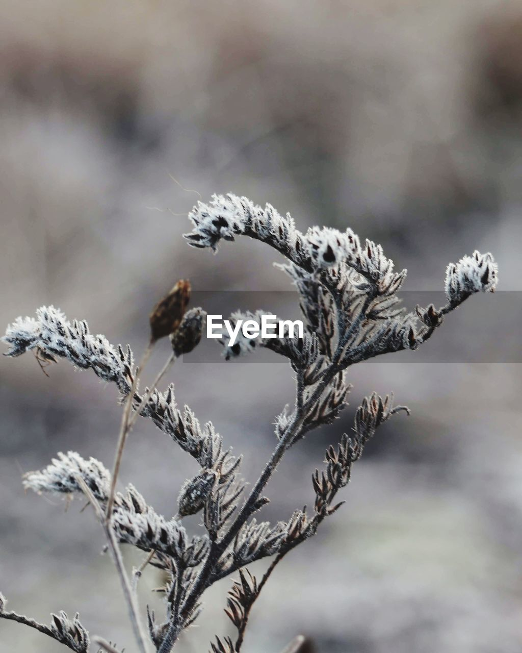 plant, focus on foreground, growth, nature, cold temperature, close-up, day, no people, winter, beauty in nature, tranquility, flower, frozen, snow, twig, plant stem, outdoors, vulnerability, fragility, dead plant, blizzard, wilted plant