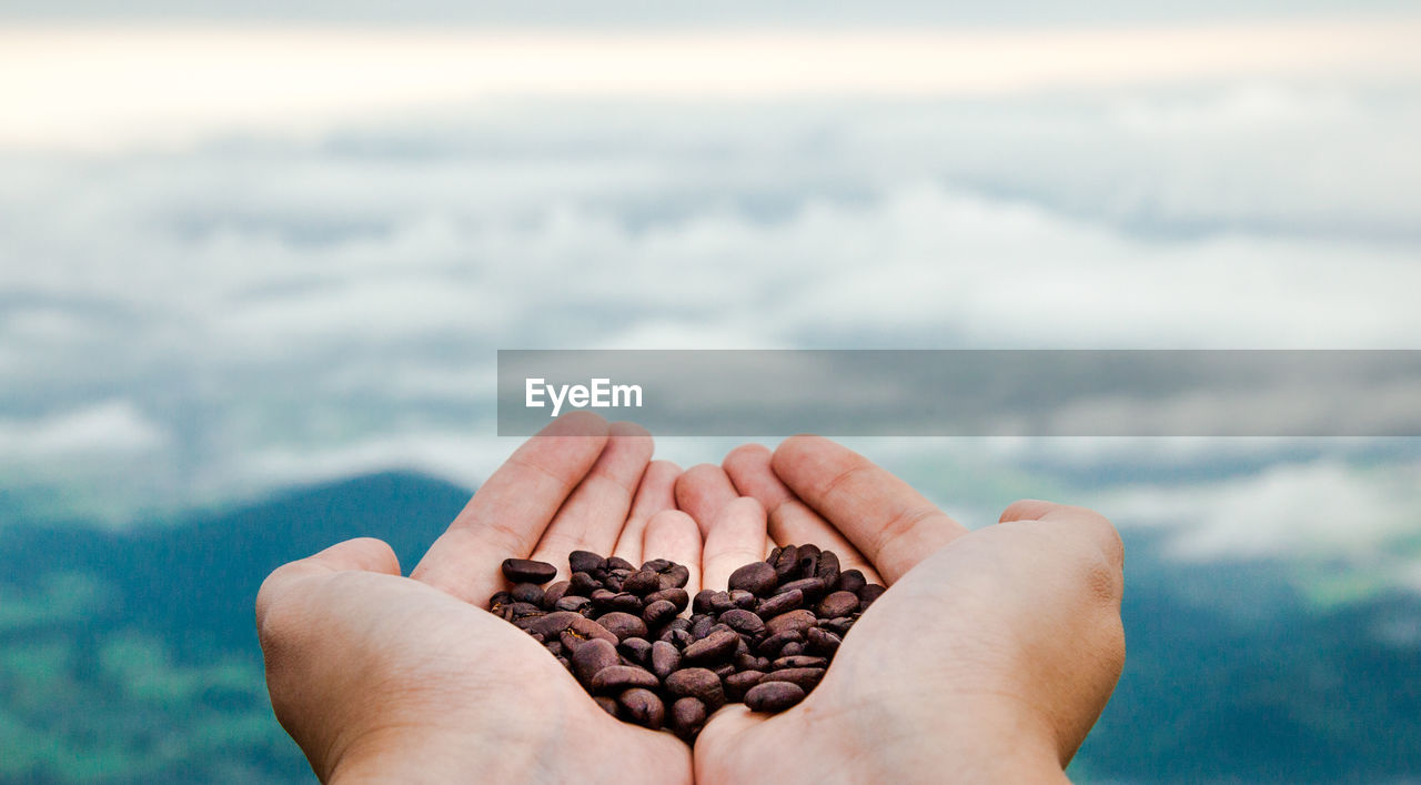 Cropped hands of woman holding roasted coffee beans against cloudy sky