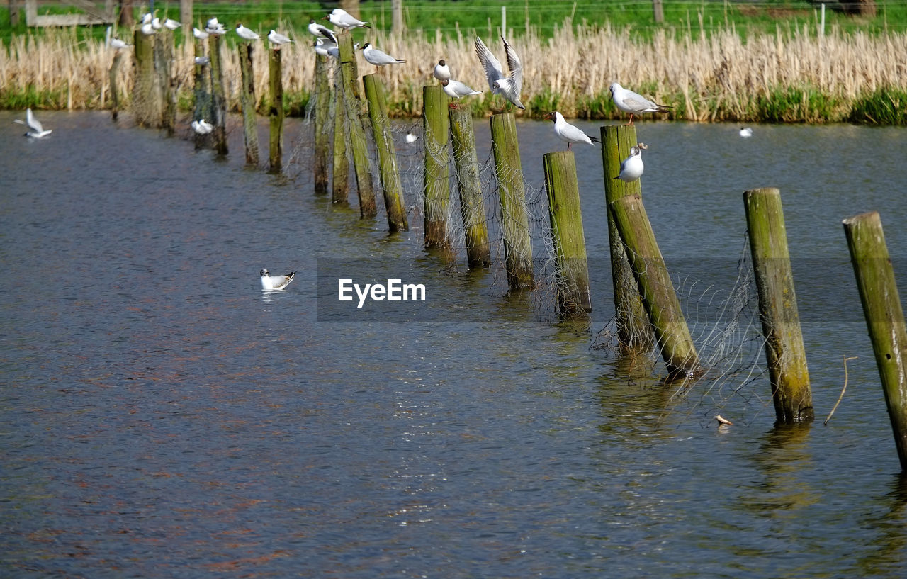 Birds Perching On Wooden Posts In Lake