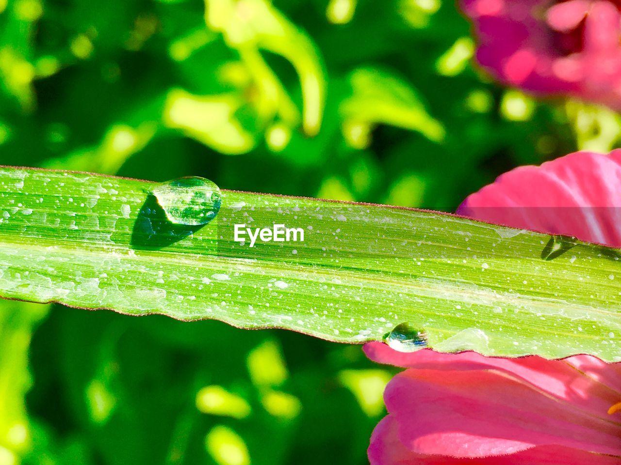 Close-Up Of Wet Leaf On Plant
