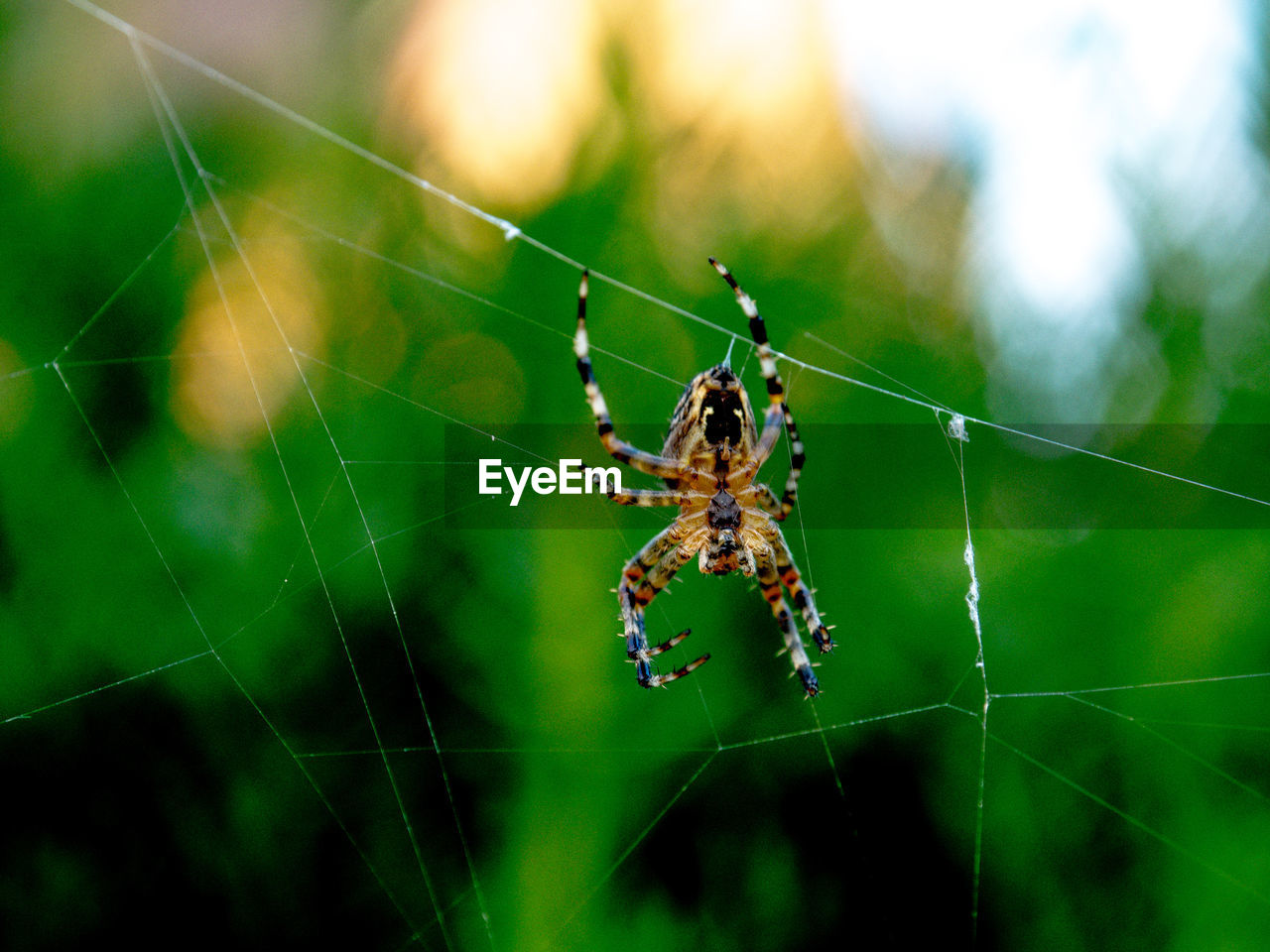 spider web, arachnid, fragility, invertebrate, spider, animals in the wild, insect, animal wildlife, arthropod, animal themes, one animal, animal, focus on foreground, close-up, vulnerability, nature, day, zoology, no people, animal leg, web, outdoors
