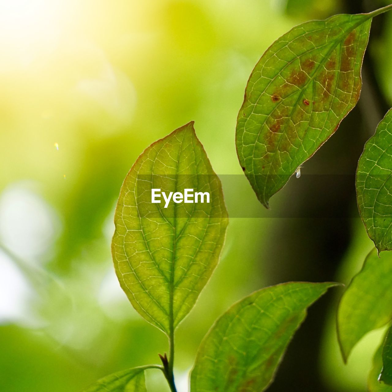 leaf, plant part, green color, plant, growth, beauty in nature, close-up, nature, day, no people, leaf vein, focus on foreground, outdoors, leaves, tranquility, freshness, vulnerability, selective focus, natural pattern, fragility