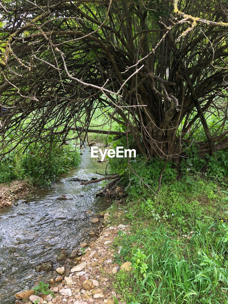 plant, tree, forest, nature, land, growth, tranquility, water, no people, beauty in nature, river, day, tranquil scene, outdoors, scenics - nature, green color, environment, branch, flowing, flowing water